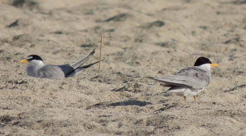 Realizan primer encuentro regional para el intercambio de experiencias sobre la conservación del Gallito Marino y otras aves