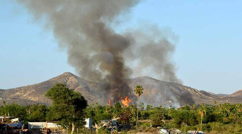 Gran movilización por incendio de palmar de El Zacatal