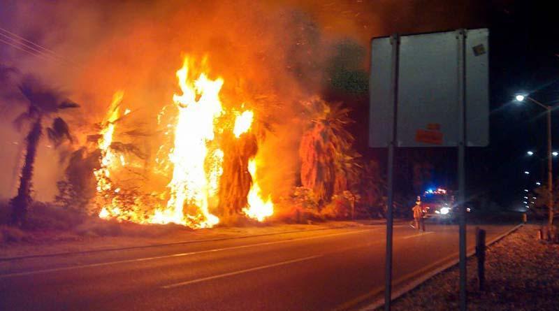 Nuevo incendio de palmeras frente a El Dorado