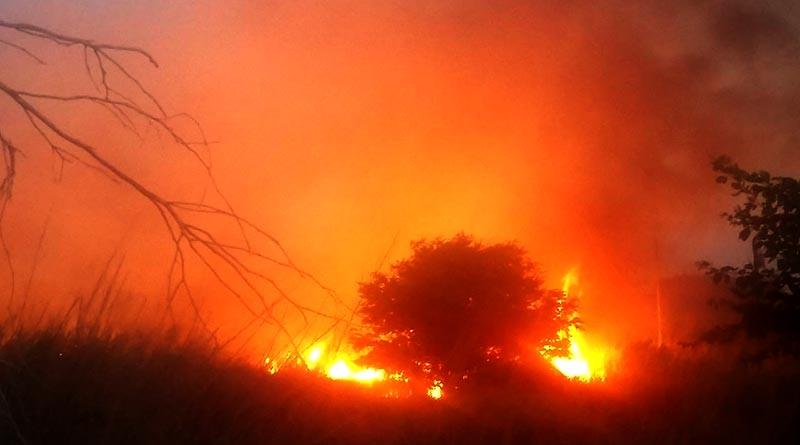 Afecta 30 hectáreas incendio en huertas y palmar de El Zacatal