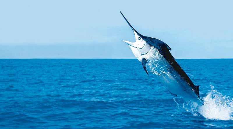 Para cuidar a Los Cabos, hay que proteger la pesca deportiva: CCC