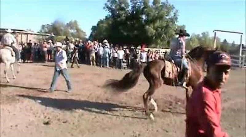 A partir del Sábado 16 Dentro de la expo Comondú 2016 Jaripeo y caballos bailadores
