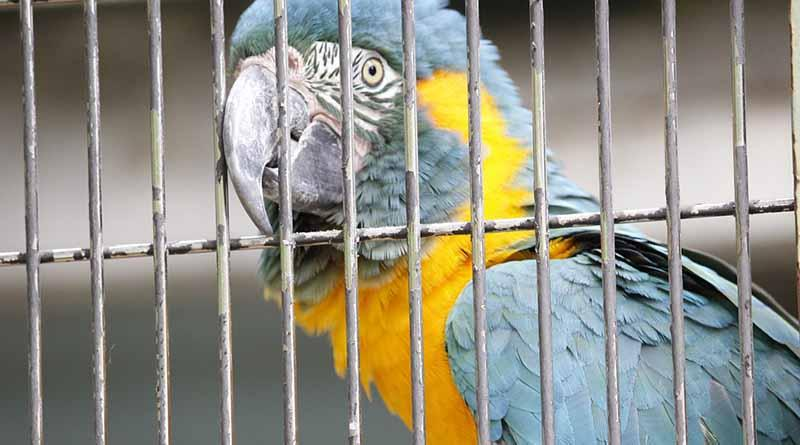 Profepa inspecciona los zoológicos en operación de todo el país