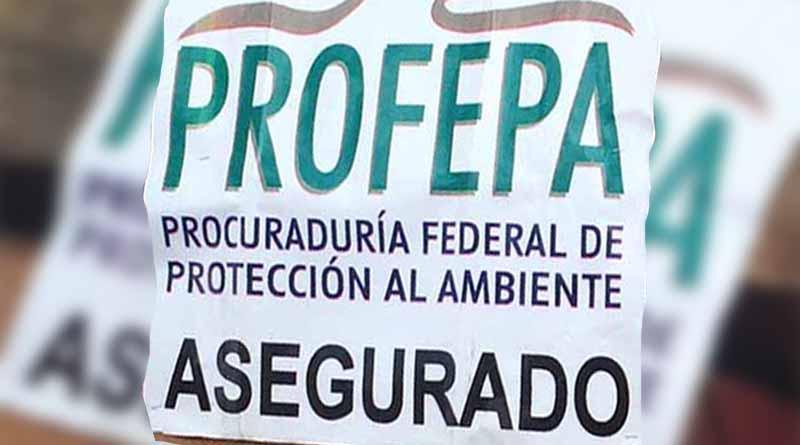Autoridades ambientales clausuran tienda en zona federal marina