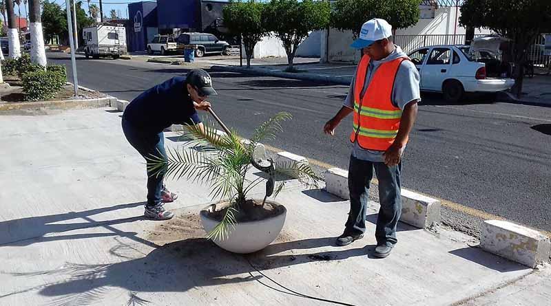 Mejoran imagen urbana de Boulevard Agustín Olachea en Ciudad Constitución
