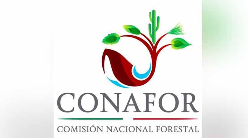 Crean cuarto centro de formación de técnicos forestales en el país