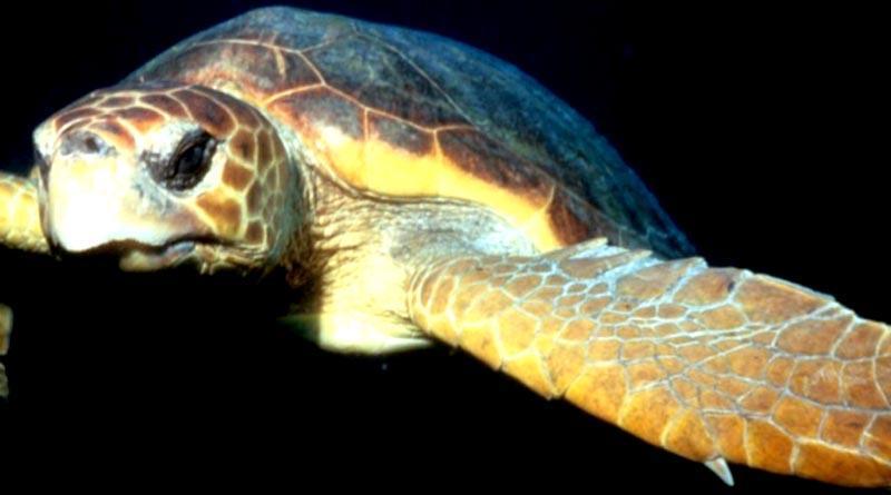 Hace llamada Venustiano Pérez a Semarnat, Profepa y Conapesca para presentar estudio sobre muerte masiva de tortugas