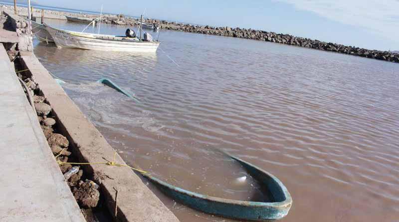Pondrá SEDESO en marcha PET para pescadores del Golfo de California
