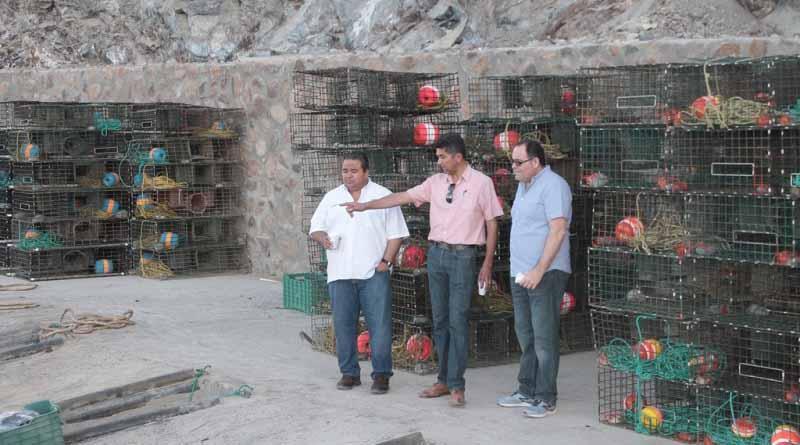 Encabeza ACU inicio de temporada de captura de langosta en zona I