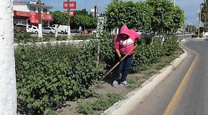 Limpian zonas urbanas del municipio de Comondú