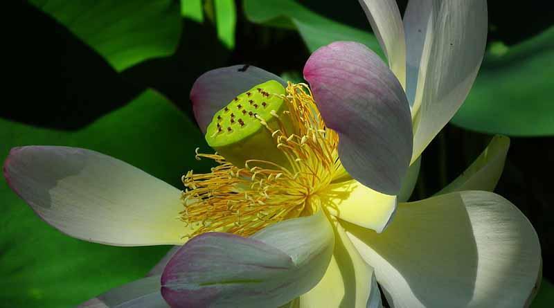 Plantas en riesgo de extinción encuentran refugio en Xochitla