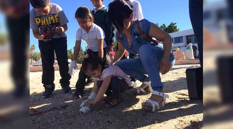 Sorpresivo nacimiento de tortuguitas en pleno malecón de La Paz