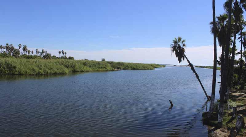 Estero, albergue de 200 especies de aves, hay mucho por qué cuidarlo y preservarlo, coinciden autoridades ambientales locales