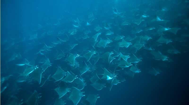 SECTUR promueve conservación del parque marino de Cabo Pulmo