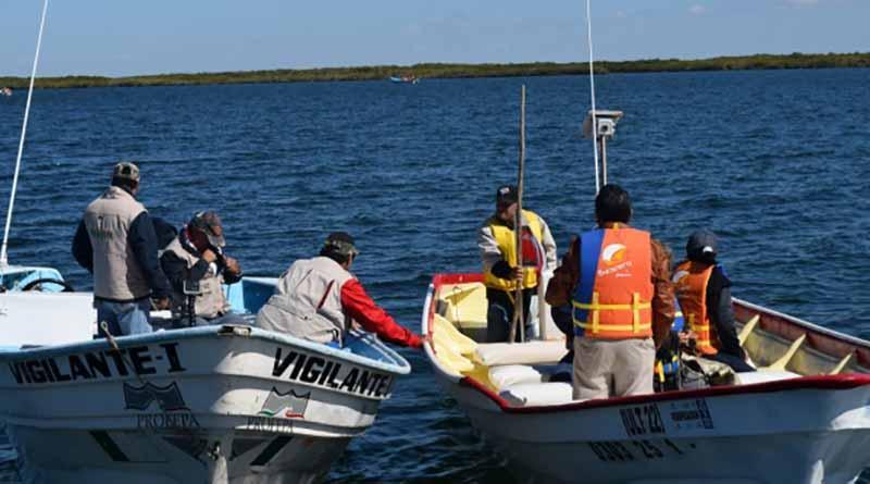 Realiza Profepa operativo de vigilancia para proteger y conservar ballena gris