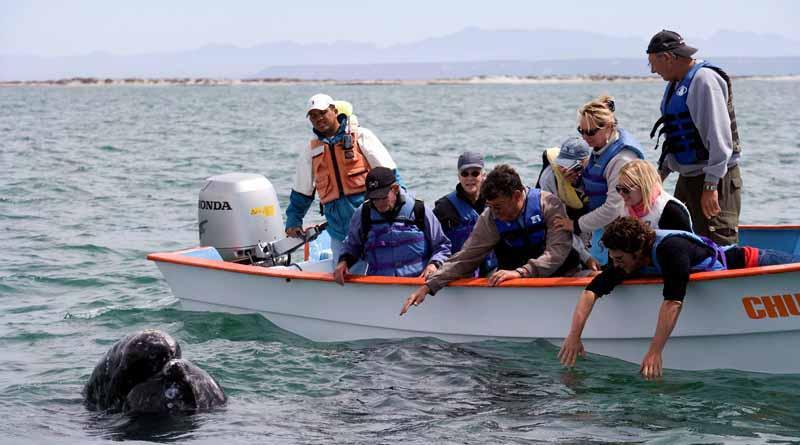 Estudian desplazamiento de ballenas por calentamiento global