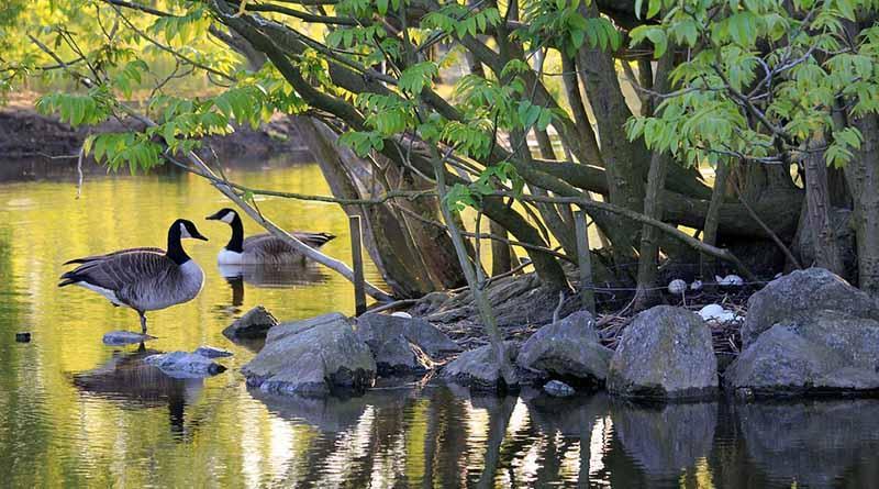 Reconocen importancia de aficionados en favor de biodiversidad