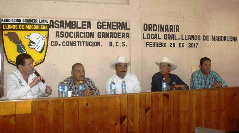 Gobierno Municipal, Gran Aliado del Sector Ganadero: ACE