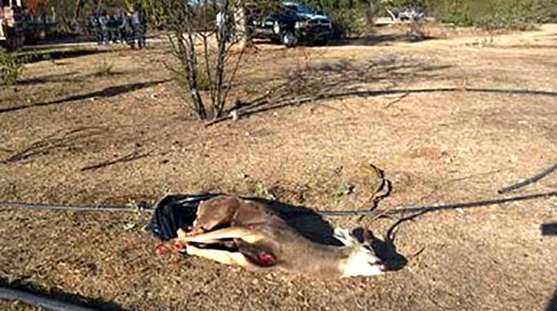En operativo detiene Gendarmería Nacional a sujeto que había cazado un venado ilegalmente en San Antonio