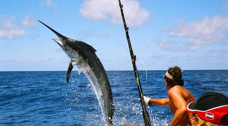 Propone Dip. Eda Palacios Márquez que el 25 de mayo de cada año sea el día de la pesca deportiva en BCS