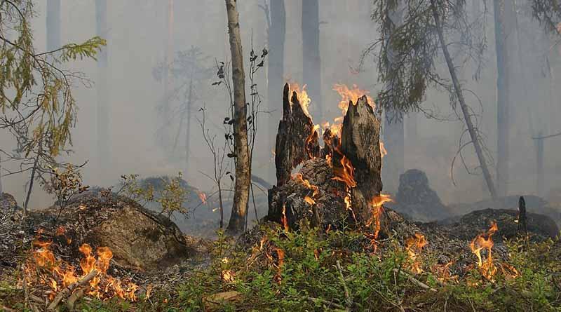 Temporada de incendios forestales abarca nueve meses del año