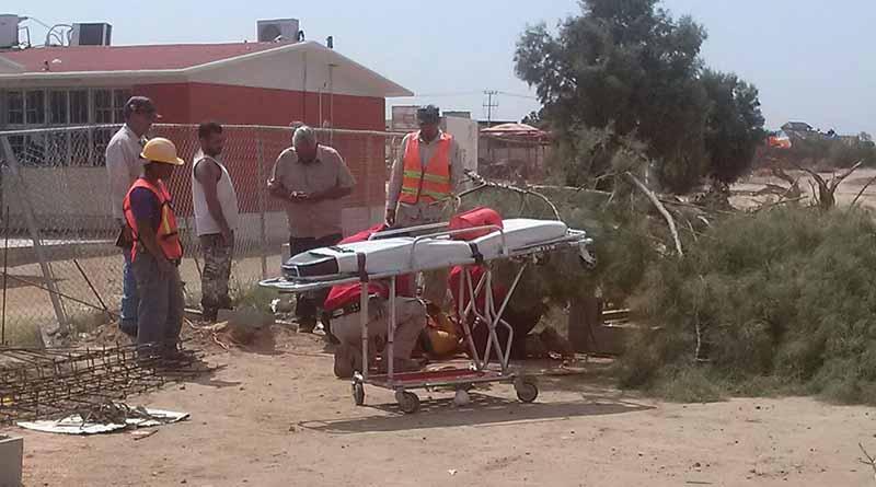 Le cae árbol encima a trabajador de la construcción en La Paz