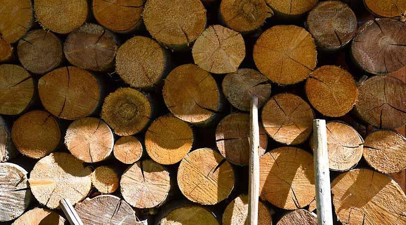 La madera, el recurso renovable que abastece más energía que el Sol