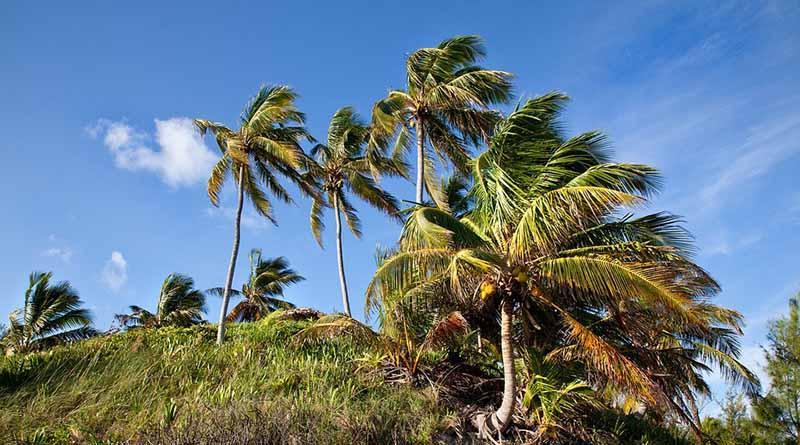 Advierten sobre vientos superiores a 70 kilómetros por hora en el norte del país
