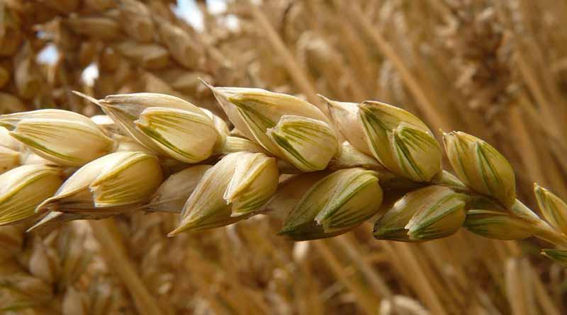 Aumenta índice de precios de alimentos de FAO 17.2 por ciento en un año
