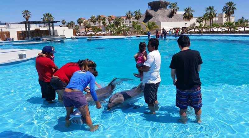 Continúa DIF Los Cabos beneficiando a niños con discapacidad a través de delfinoterapias