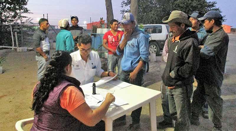 Favorece subprograma de movilidad laboral a jornaleros agrícolas en BCS: GHVK