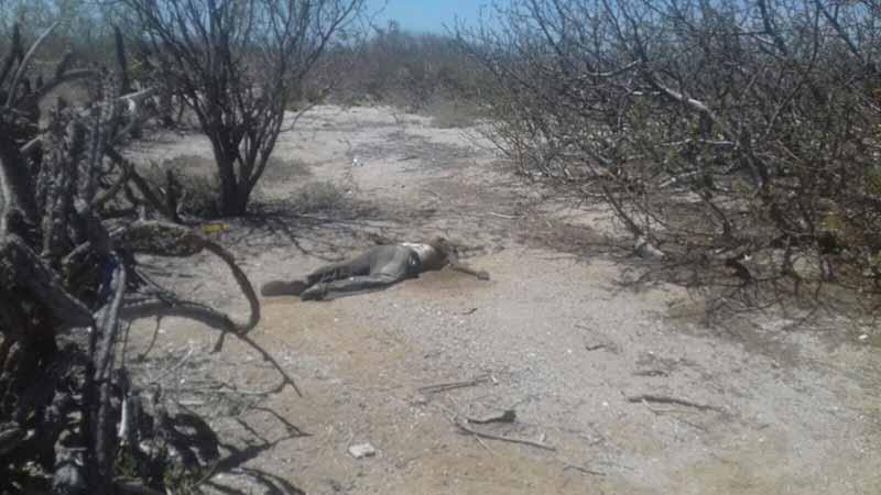 Encuentran cuerpo en estado de descomposición en El Centenario, en La Paz