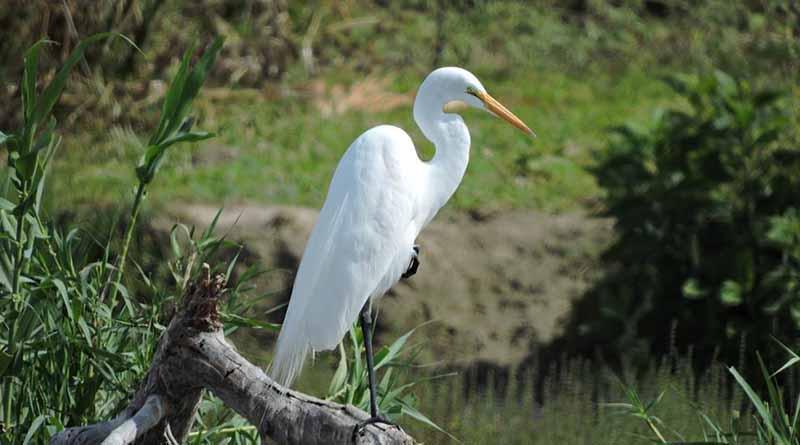 """Conanp se une a las celebraciones del """" Día mundial de las aves migratorias 2017"""""""