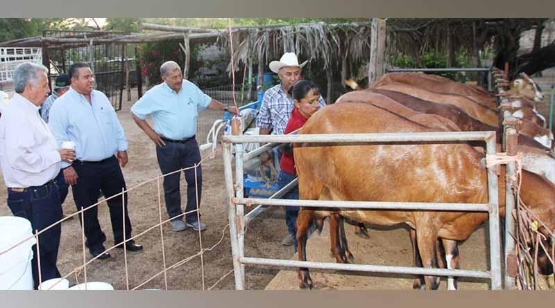 Destaca SEPADA potencial productivo de la caprinocultura