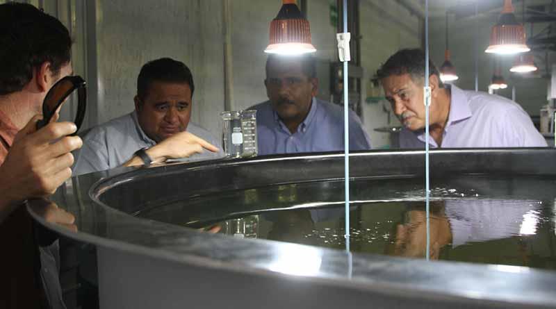 Destacan SEPADA e INAPESCA potencial de BCS en acuacultura y maricultura