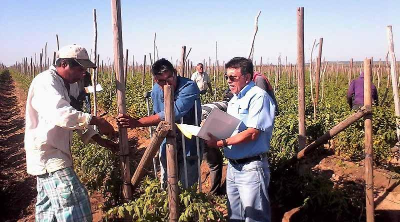 Trabajo permanente de inspección laboral en ranchos agricolas: STPS