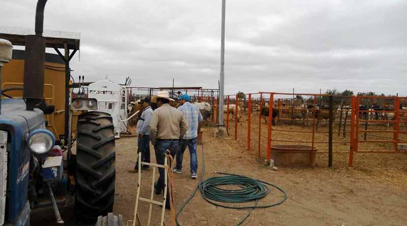 Unidad contra abigeato de la PGJE  recupera 28 bestias y un tractor de enero a junio