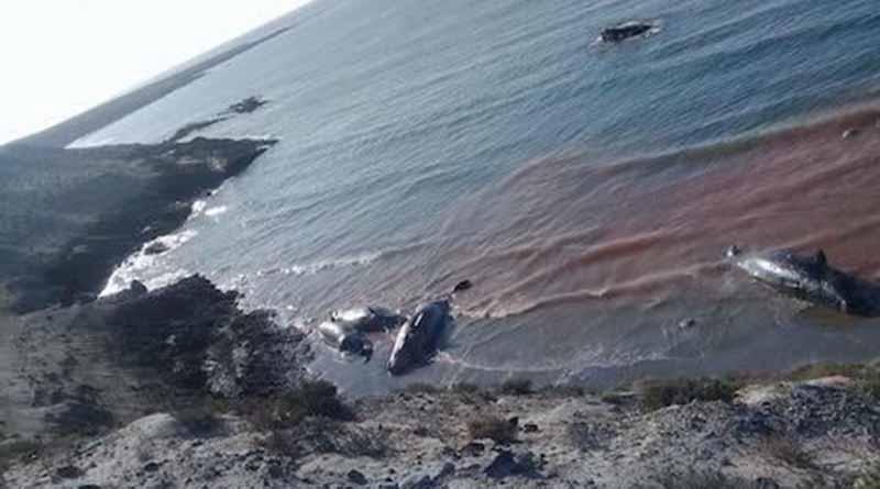 Mueren siete ballenas en una playa de Bahía Tortugas