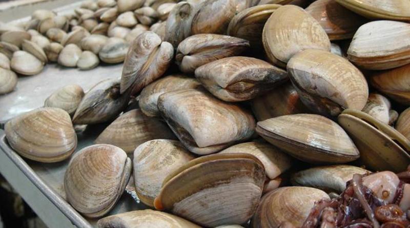 Confirma COEPRIS calidad sanitaria de moluscos bivalvos extraídos en Mulegé