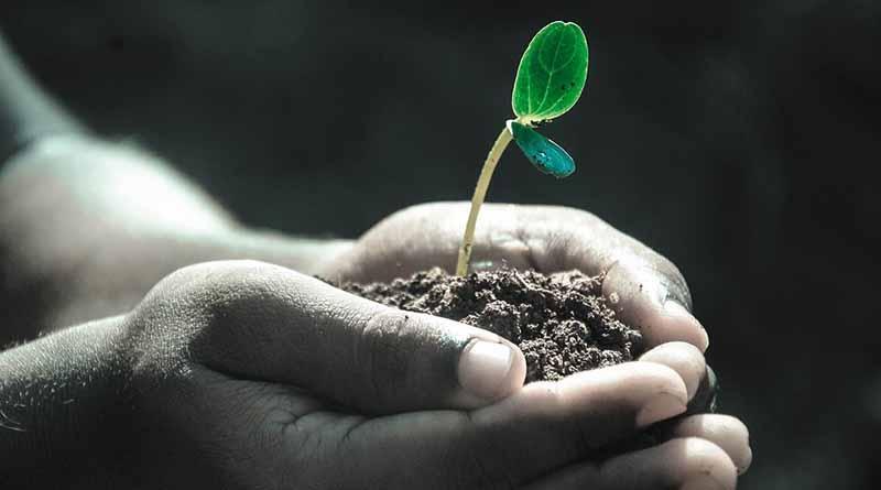 Plantan más de un millón de árboles durante campaña Un nuevo bosque