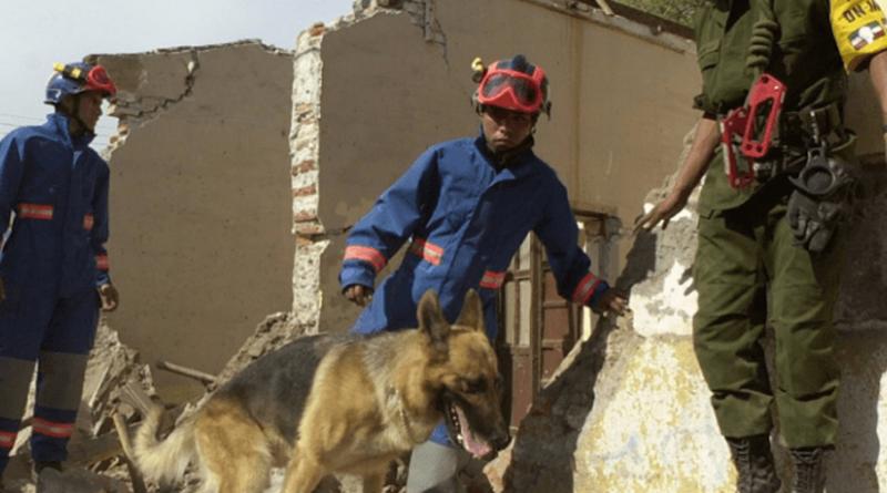 Binomios perro-humano de la UNAM salvan vidas