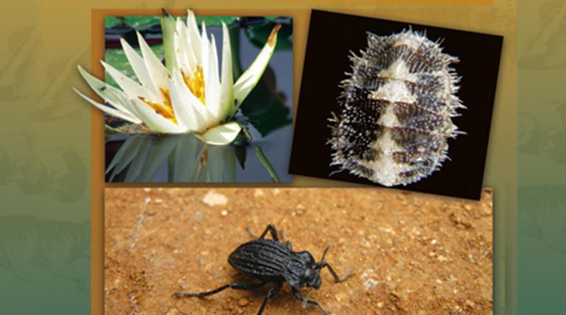 UNAM obtiene reconocimiento por la conservación de la biodiversidad