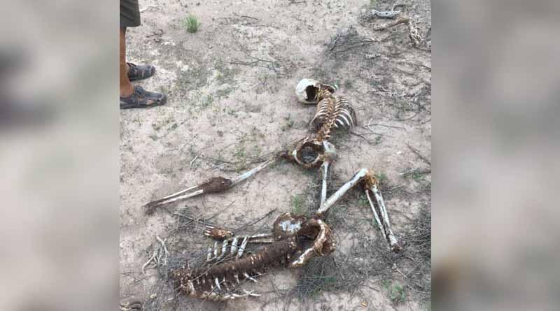 Lozalizan dos osamentas humanas en Comondú