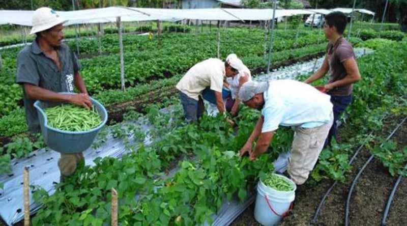 América Latina y el Caribe, lejos de erradicar el hambre en 2030 FAO
