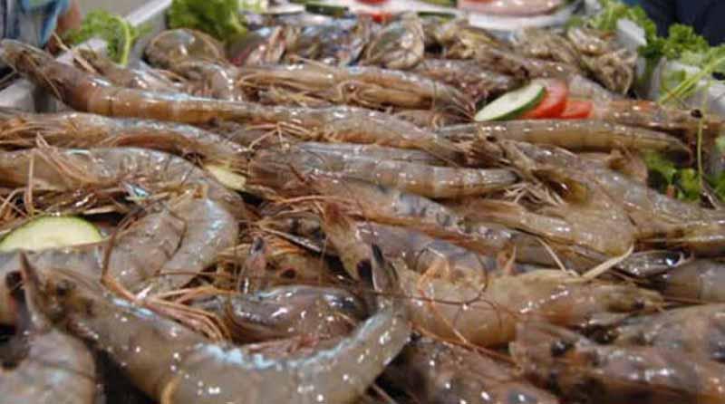 México en condiciones de impulsar exportación de camarón a Turquía