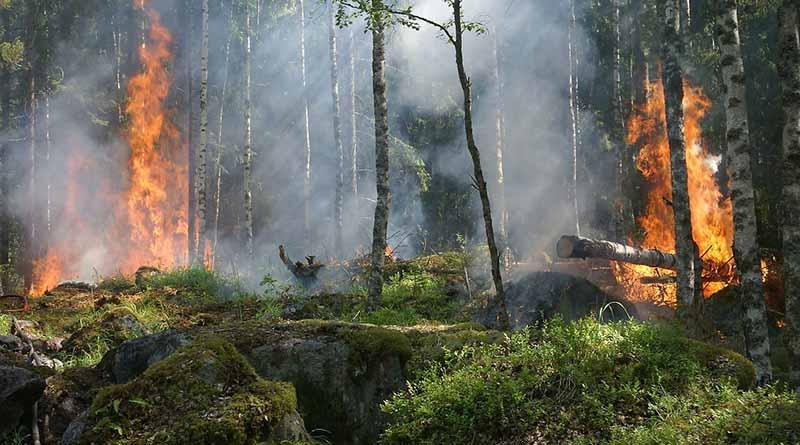 Registran 51 incendios forestales activos en 13 estados