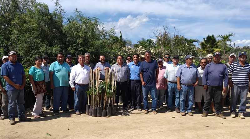 Invierten Gobierno Estatal y productores más de 8 mdp en impulso a la fruticultura