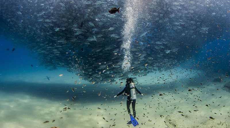 En Baja California Sur los recursos naturales son una prioridad