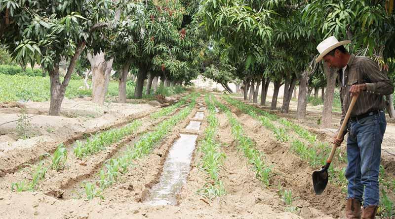 Dispersará la SEPADA 900 mil pesos en beneficio de 127 productores del municipio de La Paz