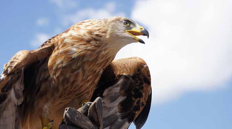 México, un país clave en el estudio de las aves ante el cambio climático